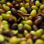 olives basilicata